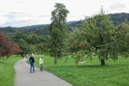 Rentierwanderung 7/2017  Spreitenbach - Egelsee - Reppischhof 29