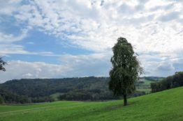 Rentierwanderung 7/2017  Spreitenbach - Egelsee - Reppischhof 31