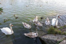 Rentierwanderung 8/2017  Wettinger Stausee 11