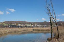 Rentierwanderung 1/2018  Klingnauer Stausee 6