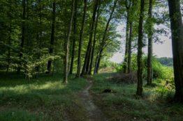 Rentierwandung 5/2019 zur Mitte des Kantons Aargau 18