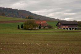 Rentierwanderung Niederweningen - Schartenfels 15