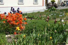 """Rentier-Spaziergang  vom 2. Juni 2021 """"Klostergärten"""" Muri 28"""