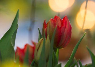 Blumen im Kerzenlicht
