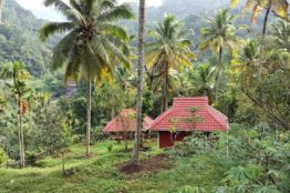 Häuser im Dschungel