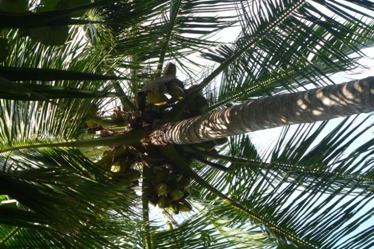 Palmbinden